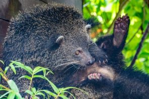 JuliePowell_Bali Zoo-14