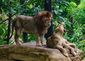 JuliePowell_Bali Zoo-15