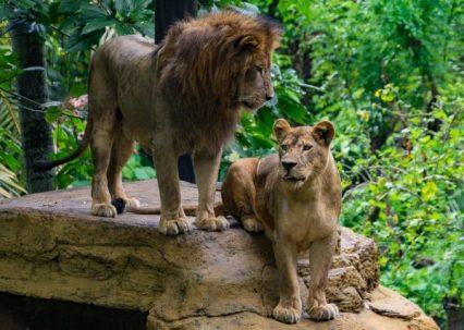JuliePowell_Bali Zoo-17