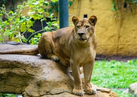 JuliePowell_Bali Zoo-18