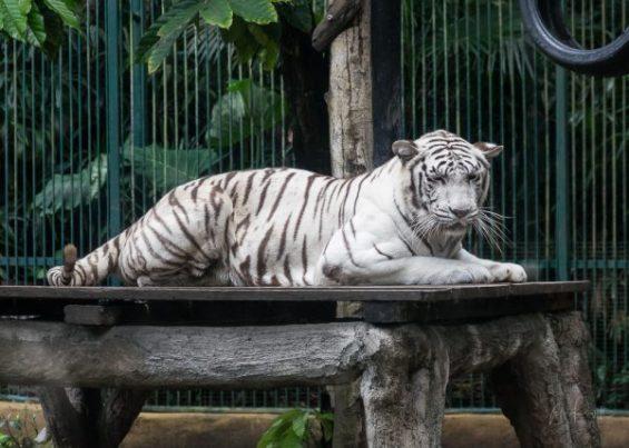 JuliePowell_Bali Zoo-24
