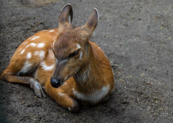 JuliePowell_Bali Zoo-34