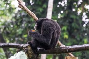 JuliePowell_Bali Zoo-36