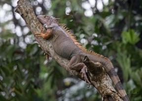 JuliePowell_Bali Zoo-38