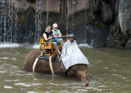 JuliePowell_Bali Zoo-40