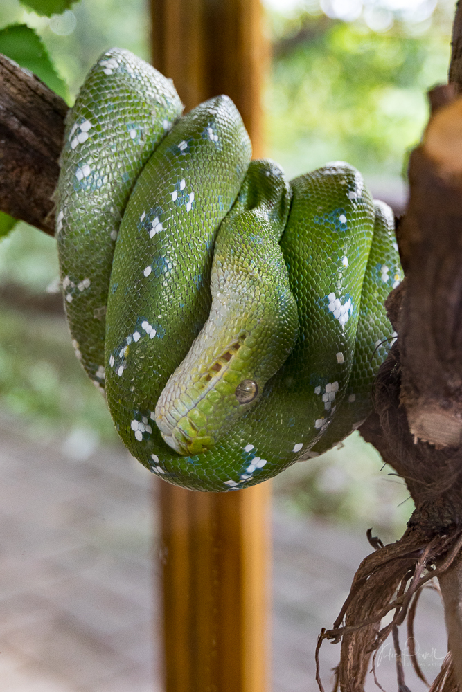 JuliePowell_Bali Zoo-44