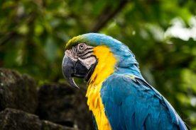 JuliePowell_Bali Zoo-5