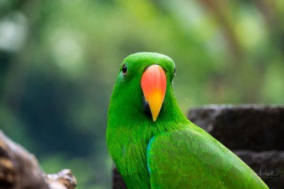 JuliePowell_Bali Zoo-7