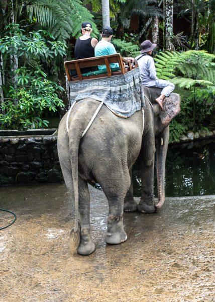JuliePowell_Elephant Sanctuary-1-2