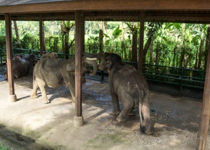 JuliePowell_Elephant Sanctuary-2-3