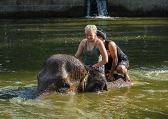 JuliePowell_Elephant Sanctuary-23