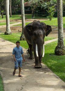 JuliePowell_Elephant Sanctuary-3-3