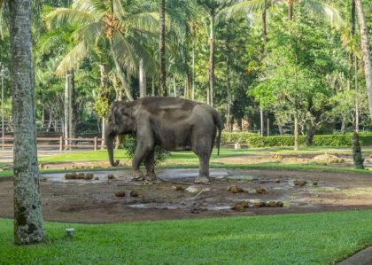JuliePowell_Elephant Sanctuary-3-4