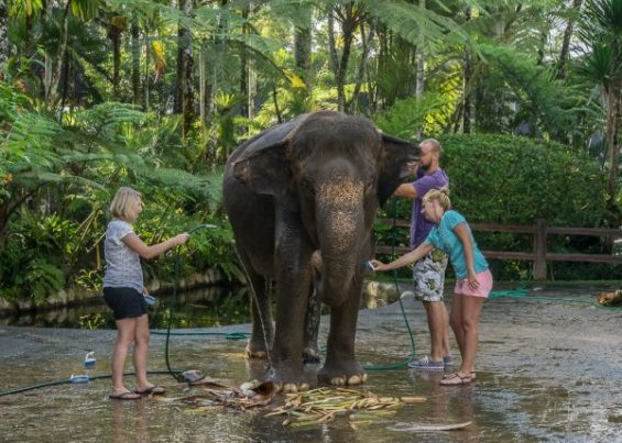 JuliePowell_Elephant Sanctuary-4-4