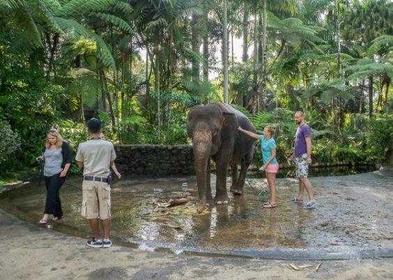 JuliePowell_Elephant Sanctuary-6-3