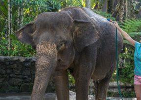 JuliePowell_Elephant Sanctuary-8-2