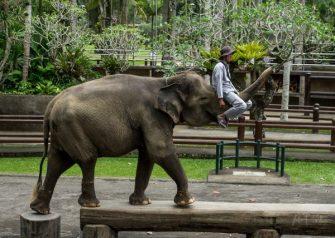 JuliePowell_Elephant Sanctuary-8-3