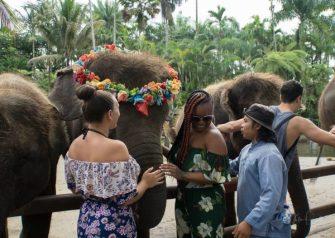 JuliePowell_Elephant Sanctuary-8