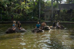 JuliePowell_Elephant Sanctuary-9-2