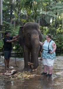JuliePowell_Julie Elephants-1