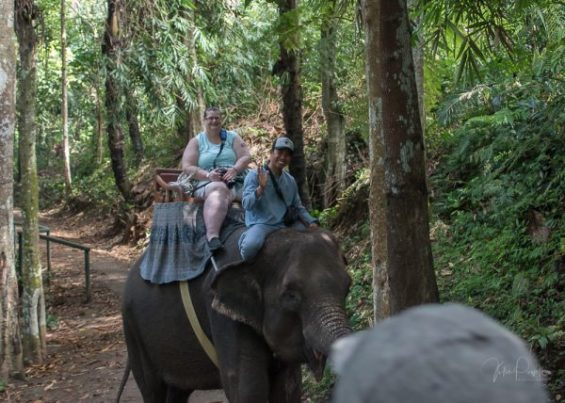 JuliePowell_Julie Elephants-2