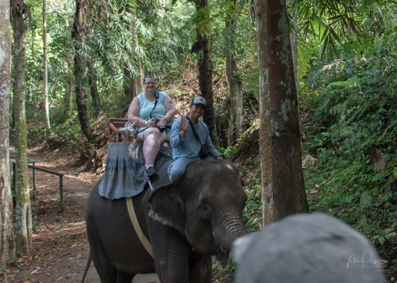 JuliePowell_Julie Elephants-2
