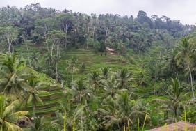 JuliePowell_Rice Terraces of Kintamani-3