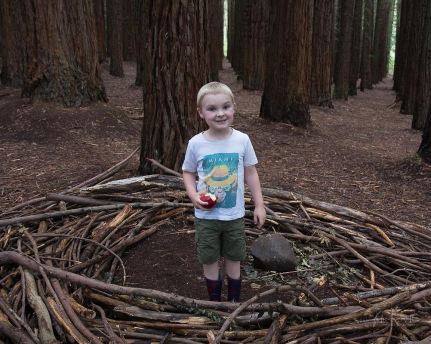 JuliePowell_Redwoods-2
