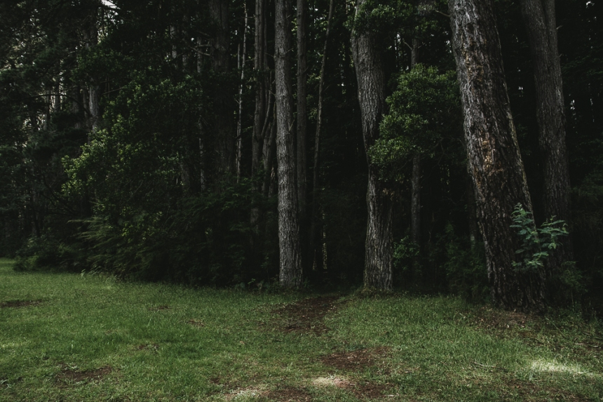 JuliePowell_Redwoods
