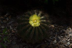 JuliePowell_Botanic Gardens-11