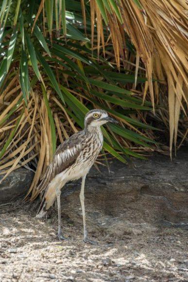 JuliePowell_Botanic Gardens-13