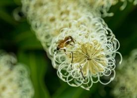 JuliePowell_Botanic Gardens-42