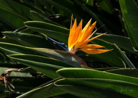 JuliePowell_Botanic Gardens-6