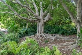 JuliePowell_Botanic Gardens-81