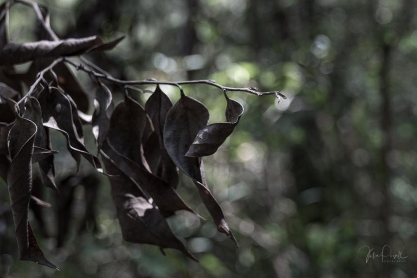 JuliePowell_Minyon Falls-27