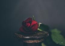 Powell-Julie_DM Rose-3
