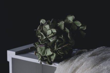 Powell-Julie_Hydrangea-7