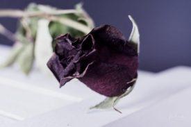 Powell-Julie_Rose-10