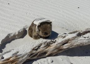 Powell-Julie_Squeaky Beach-3