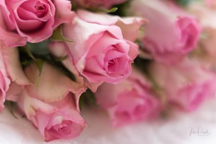 Powell-Julie_Vintage Pink-11
