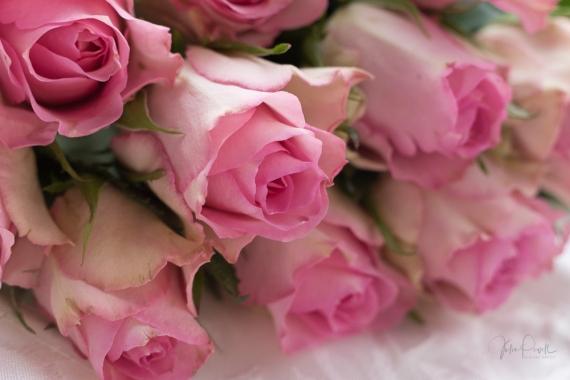 Powell-Julie_Vintage Pink-12