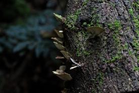 Powell-Julie_Ada Tree-16