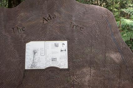 Powell-Julie_Ada Tree-24