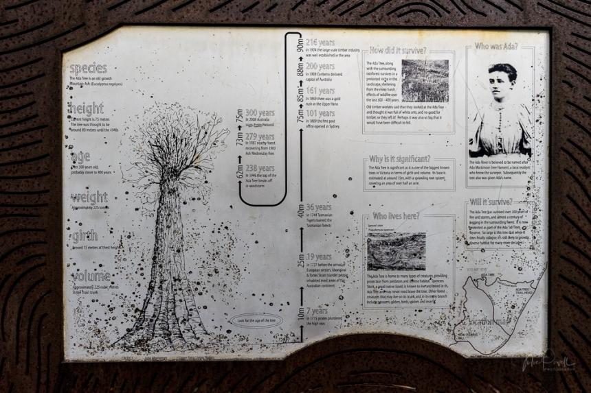Powell-Julie_Ada Tree-29