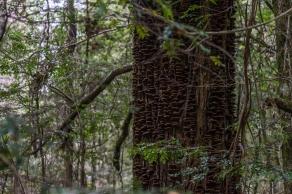 Powell-Julie_Ada Tree-30