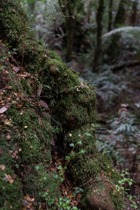 Powell-Julie_Ada Tree-7