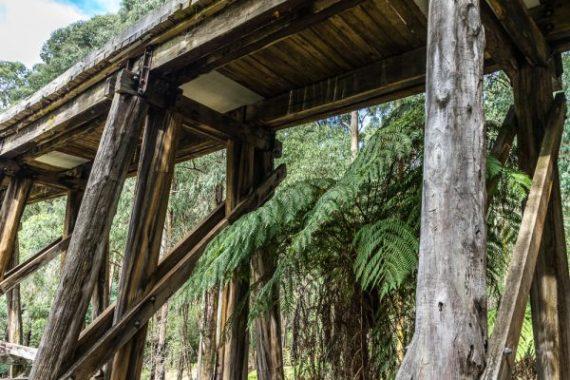 Powell-Julie_Noojee Trestle Bridge-12