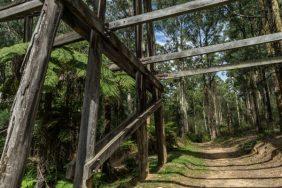 Powell-Julie_Noojee Trestle Bridge-17