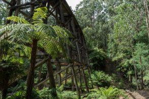 Powell-Julie_Noojee Trestle Bridge-3