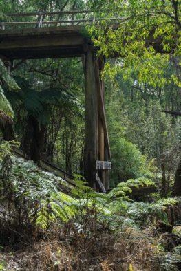 Powell-Julie_Noojee Trestle Bridge-6